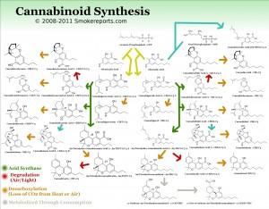 cannabinoidsynthesis